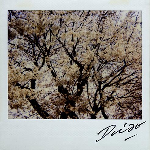 Daido Moriyama, 'Untitled', 2008, Aura Gallery