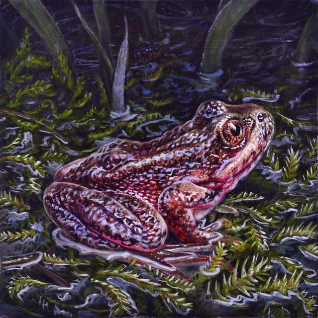 , 'Red Legged Frog,' 2016, William Baczek Fine Arts