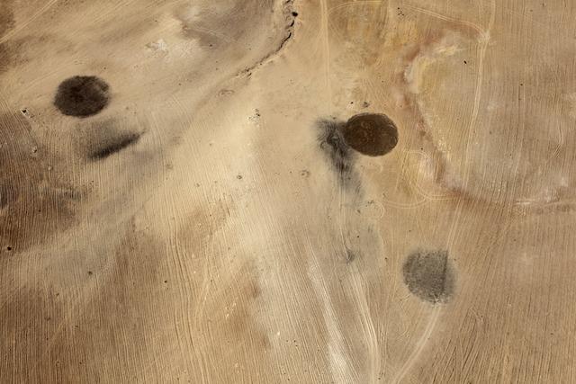 , 'Desert Bloom 4,' 2011, Pace/MacGill Gallery
