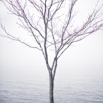, 'Spring Tree in Fog, Lincolnville, Maine,' 2012, Robert Mann Gallery