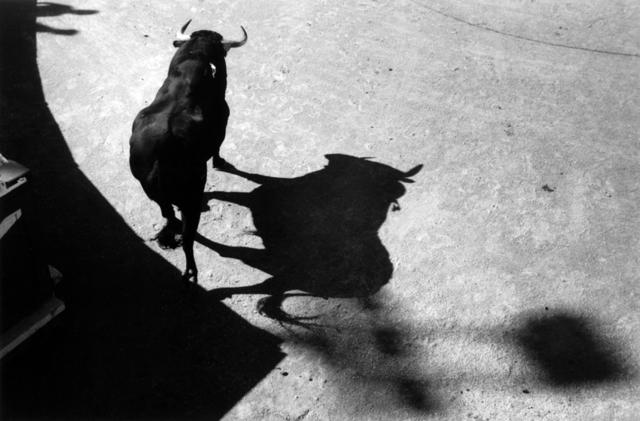 , 'Le taureau des ombres Arles,' 2009, Bernheimer Fine Art