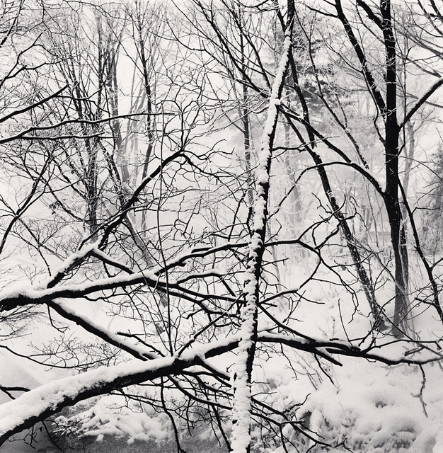 Michael Kenna, 'Kawayu Forest, Study 2, Hokkaido, Japan', 2014, Photography, Toned gelatin silver print, G. Gibson Gallery