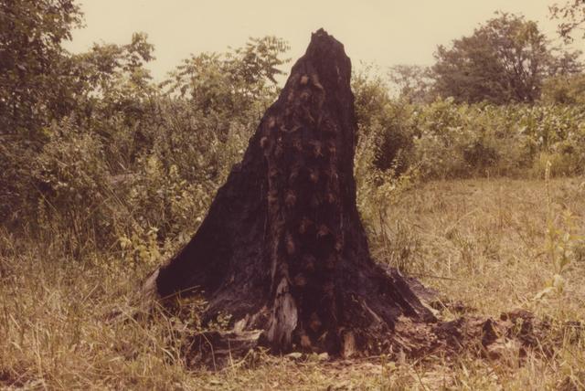 , 'Silueta Series (Tree of Life Series),' 1978, Galleria Raffaella Cortese