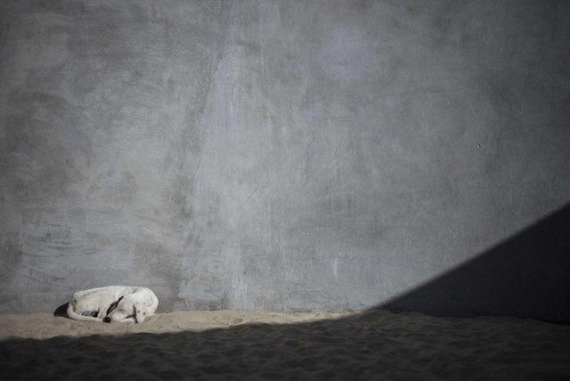 , 'Perro semienterrado,' 2014, Travesia Cuatro