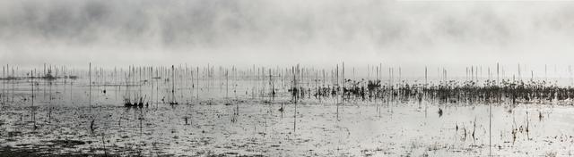 , 'Eagle Lake Nest, August 25, 7:59 AM,' 2010, photo-eye Gallery