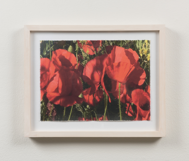 , 'Poppies #10,' 2015, Martin Asbæk Gallery