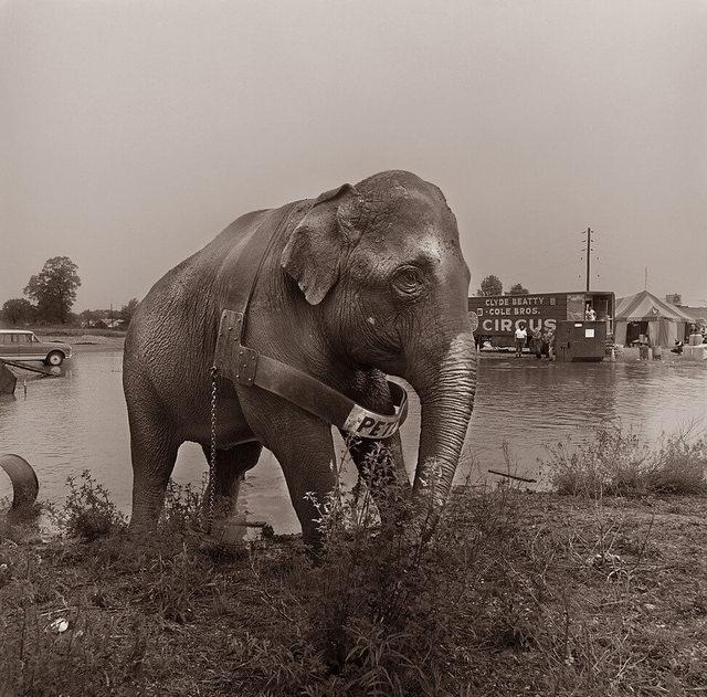, 'Elephant and Water,' 1979, Jacob Babchuk Gallery