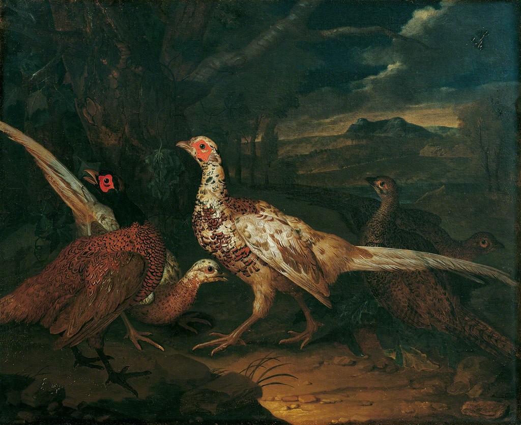 Philipp Ferdinand de Hamilton, Pheasants, 1745, © Belvedere, Vienna