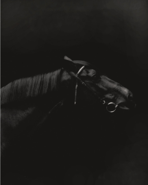 , 'Trakehner, Mare I, Germany,' 2015, Bernheimer Fine Art