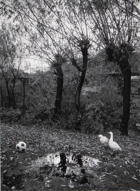 Pentti Sammallahti, 'Transylvania, Romania', 2015, photo-eye Gallery