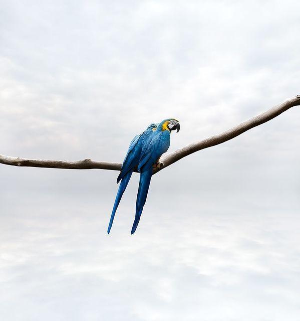 , 'Pondering Parrots,' 2019, The Directed Art Modern