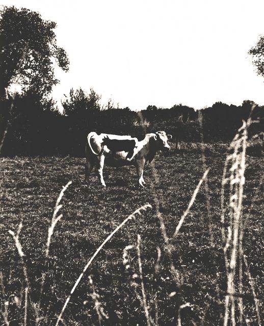 Vik Muniz, 'Two Cows', 1997, Galeria Nara Roesler