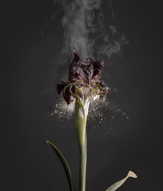 , 'Iris Atropurpea D01,' 2018, Yancey Richardson Gallery