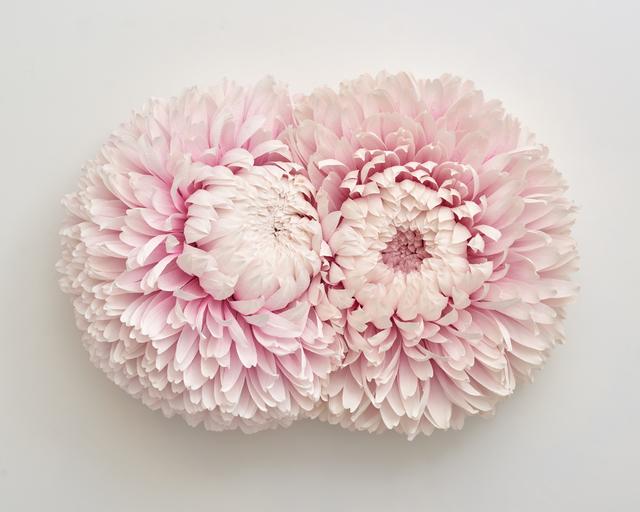 , 'Specimen D (Double Headed Chrysanthemum),' 2019, Eleanor Harwood Gallery