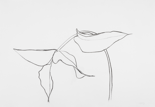, 'Philodendron I,' 1983-1985, Susan Sheehan Gallery
