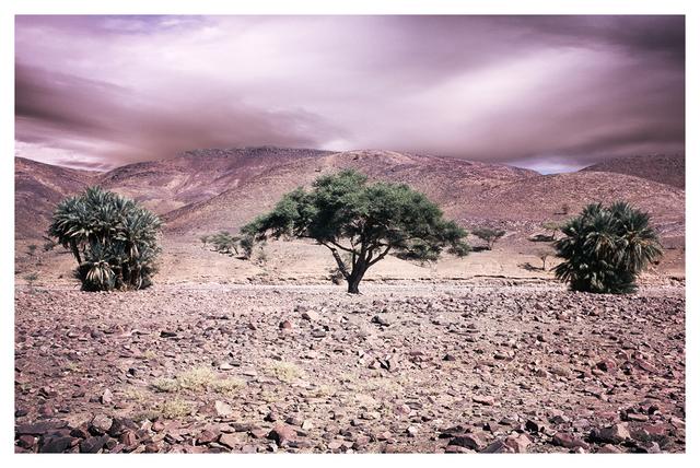 Bernhard Quade, 'Anti-Atlas Trees, Morocco', 2014, CHROMA GALLERY