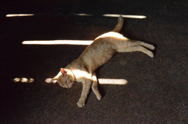 , 'Cat in Sun, from the series Constellations,' 2015, Circuit Gallery