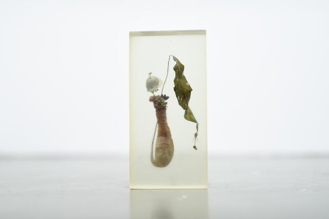 , '»ying Fisch | Mann«,' 2016, SMUDAJESCHECK