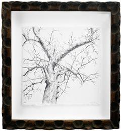 Secret Life of Trees #105