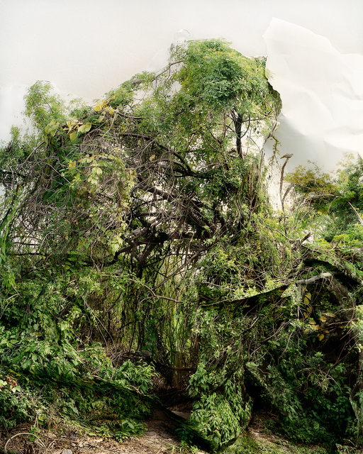 Laura Plageman, 'Response to Shrub with Doves', 2006, Photography, Digital pigment print, De Soto Gallery
