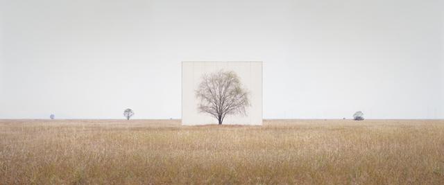 , 'Tree…#3,' 2012, Yossi Milo Gallery