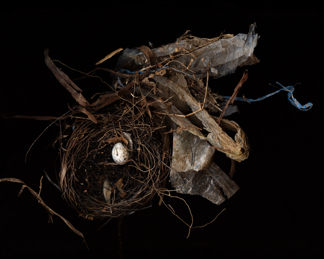 Lisa Frank, 'Nest (Modern Digital Bird Nest Still Life)', 2007, Carrie Haddad Gallery