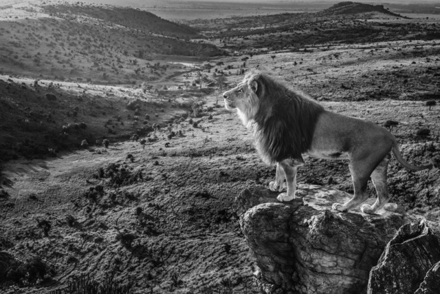 David Yarrow, 'Pride Rock ', 2019, Maddox Gallery