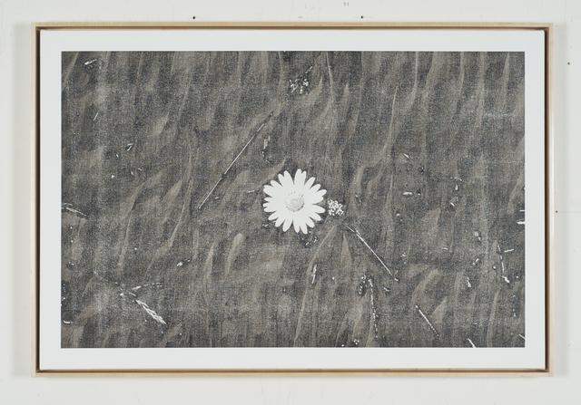 , 'Static Image Painting/Grey/Wildflower/Wildwood Road/Hampstead/London/Walking Back From Heathwood/Three,' 2015-2016, Wilding Cran Gallery