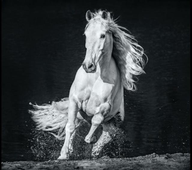 David Yarrow, 'Horsepower', 2020, Photography, Archival Pigment Print, Maddox Gallery