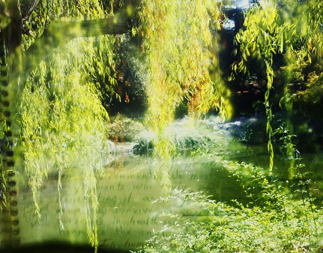 , 'Huntington Chinese Garden and Octavia E. Butler Archive (item 3245 commonplace book), journal fragment on climate change, 1990,' 2016, Denise Bibro Fine Art