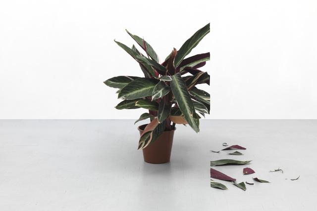 , 'Plant 1,' 2018, Federico Luger (FL GALLERY)