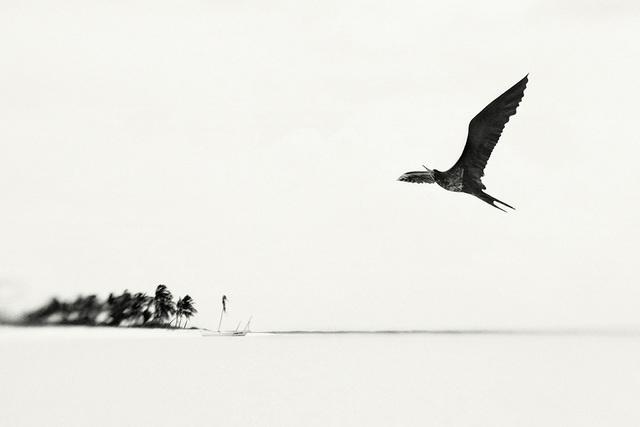 , 'Elena Lyakir - As the palms spell your name,' 2010, Galerie Claude Samuel
