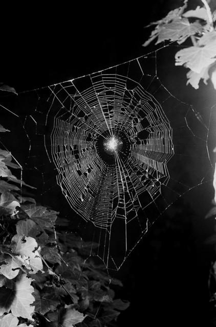 , 'Spinnennetz No.5,' 2004, Lange + Pult