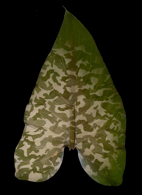 , 'Military Foliage #43,' 2010, Lisa Sette Gallery