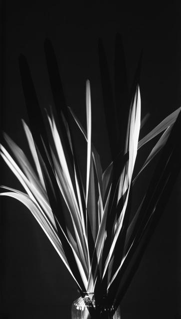 , 'Schatten VI,' 2016, GALERIE BENJAMIN ECK