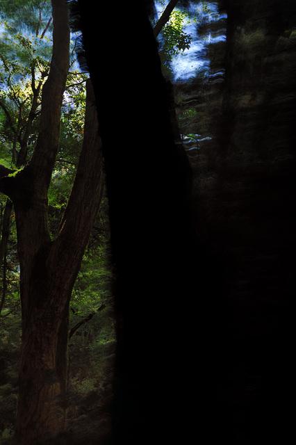 Yasuo Kiyonaga, 'Split of the forest 41', 2010, Photo Gallery Artisan