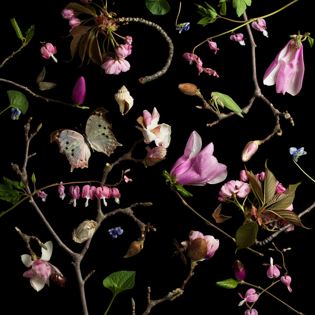 , 'Botanical III (Bleeding Hearts and Magnolias),' 2013, Robert Klein Gallery