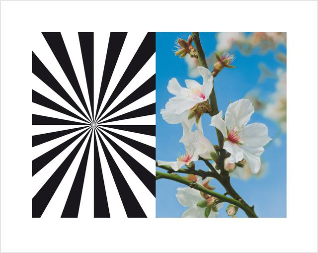 , 'Exstasy Almond Blossom,' 2012, Other Criteria