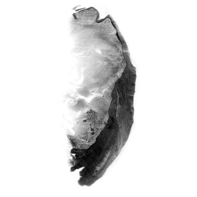 , 'Escaneo 12,' 2017, Terreno Baldío
