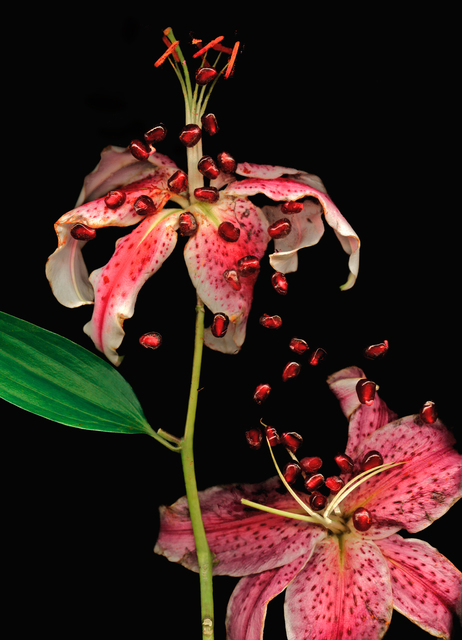 Lisa Frank, ' 1 image Day Lily and Pomegranate Seeds (Modern Digital Print of Pink Flower Still Life)', 2007, Carrie Haddad Gallery