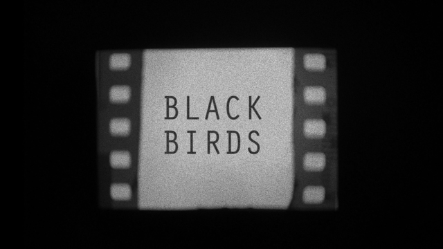 , 'Black Birds,' 2017, Circle Art Agency