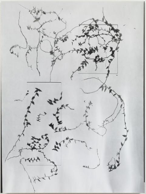 , 'Pressed Specimens3p,' 1991, Kamakura