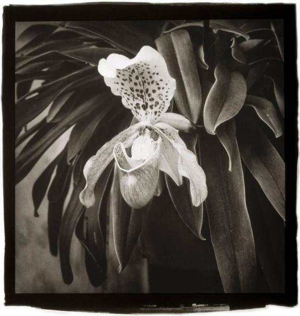 Cy DeCosse, 'Lady Slipper', Gallery 270
