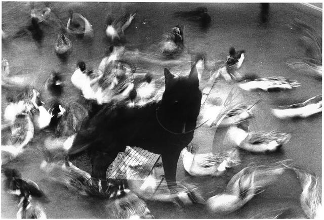 , 'WARNING #1,' 2008, Christophe Guye Galerie