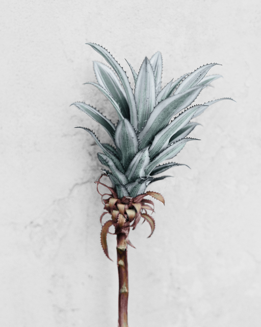 , 'Ananas Comosus ,' 2016, The Photographers' Gallery