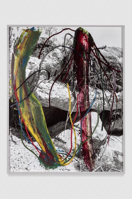 , 'Roots,' 2016-2017, Galerie Eva Presenhuber