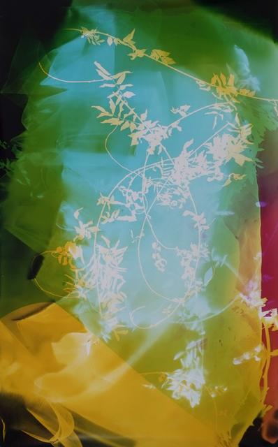 , 'Field Recording (Sun Room IV),' 2016, Yancey Richardson Gallery