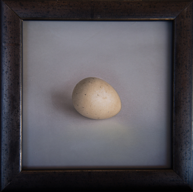 Kate Breakey, 'Quail Egg 29', 2019, Photography, Hand-colored archival pigment print, Etherton Gallery