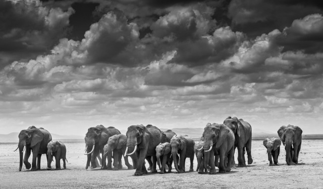 David Yarrow, 'The Crossing', Photography, Archival ink on paper, Fineart Oslo