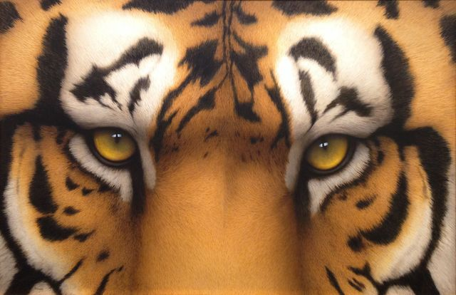 , 'Tiger Eyes II,' 2016, J. Cacciola Gallery